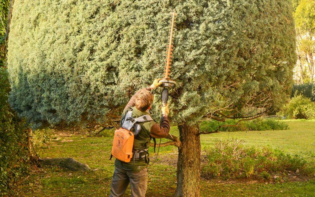 entretien-taille-arbre-residence-Hyeres-Var-83