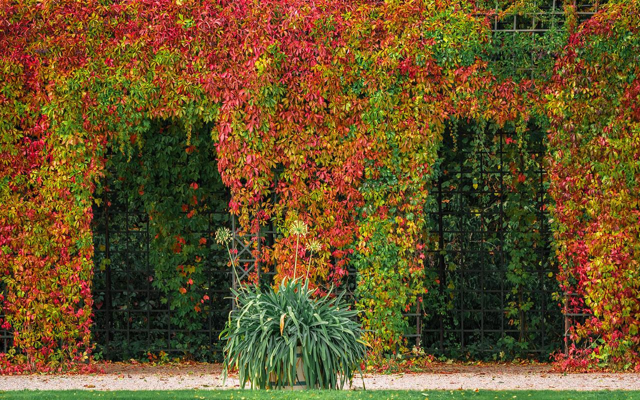 jardinier-paysagiste-hyeres-toulon-83-Var