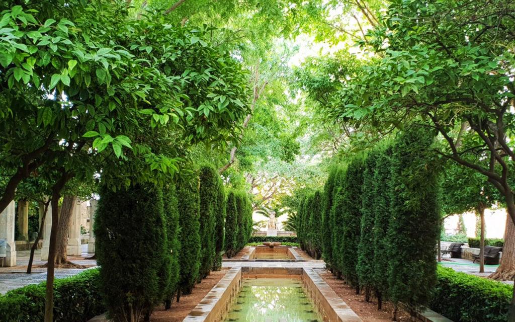 plantation-arbre-var-hyeres-toulon-83