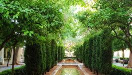 Rôle et choix des arbres et arbustes dans les jardins de Provence et de la Côte d'Azur