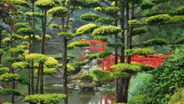 La taille des arbres et arbustes en nuage inspirée du jardin japonais