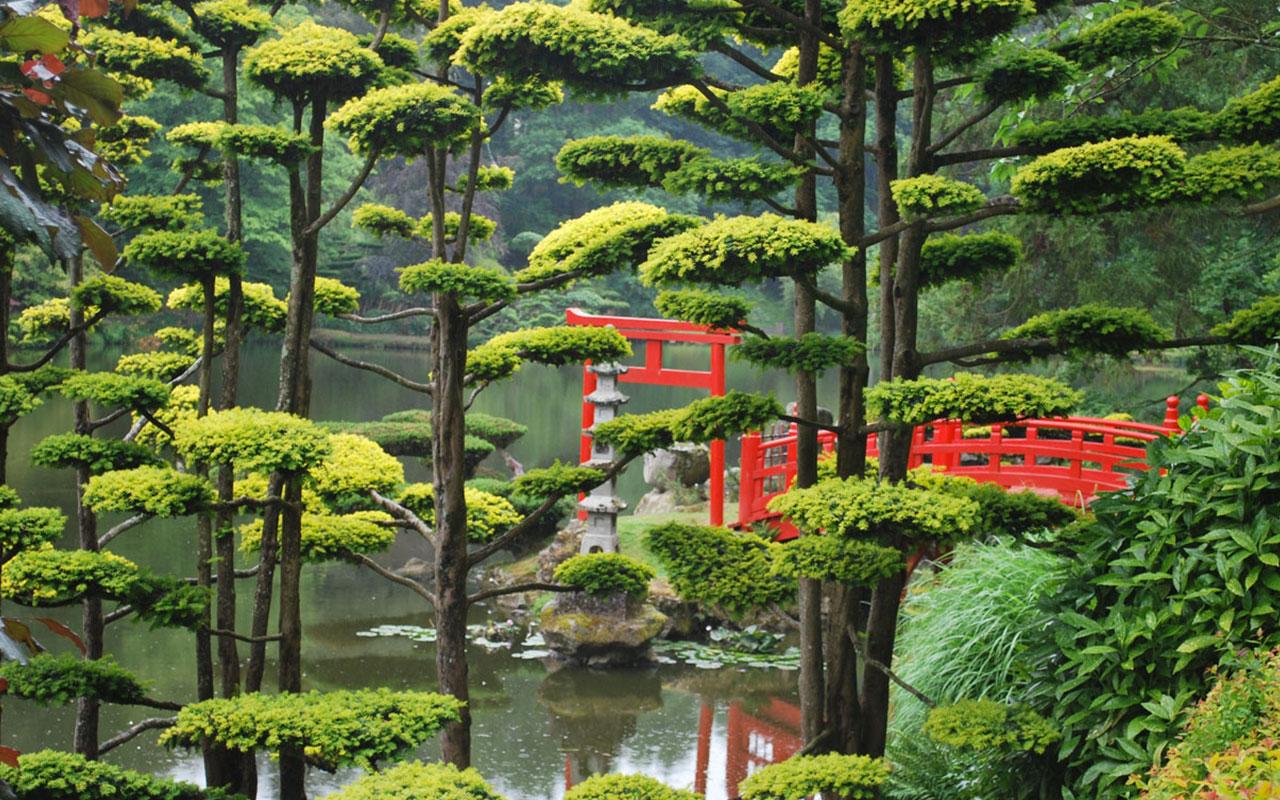 jardinier-paysagiste-taille-nuage-jardin-japonnais