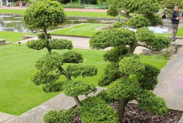 taille-nuage-arbre-taille-niwaki