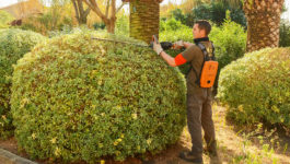 Entretien de jardin en été : quels travaux de jardin réaliser pendant cette période?